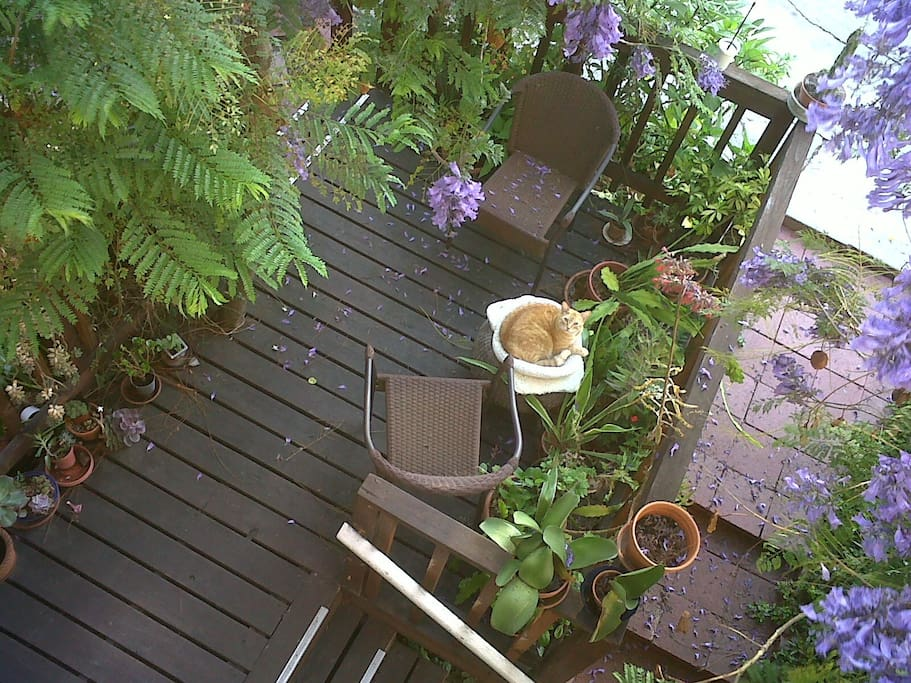 wooden deck for quiet outdoor sitting in teh sahe behind the house
