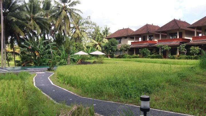 Arjana Bungalows Rife Fields Ubud Bali