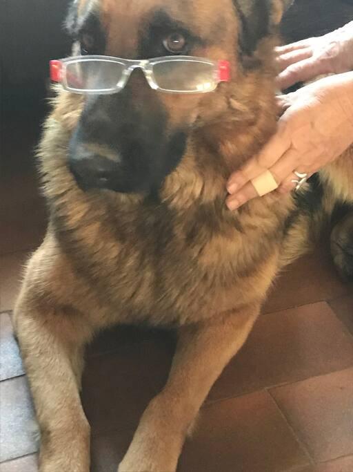 IDYLLE elle est comme moi, elle a besoin de lunettes.