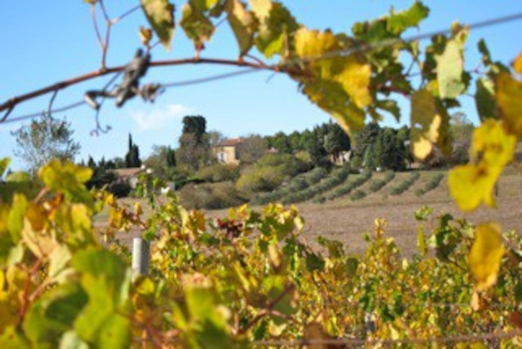 Domaine de la Bade - located on the top of a lovely hill, surrounded by vineyards and olive grooves