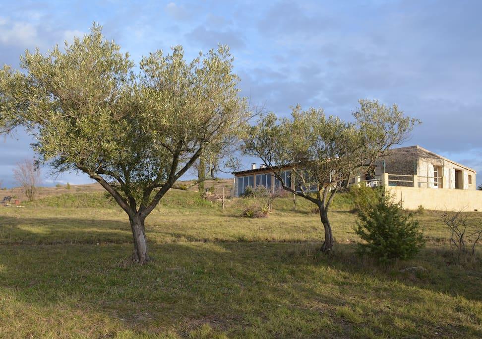 Mas amongst the olive tree's