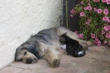 The dog and a cat