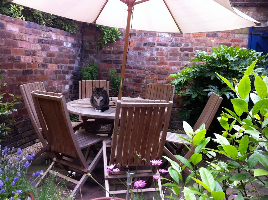 Meet Tiga, one of my two cats, relaxing in the courtyard.