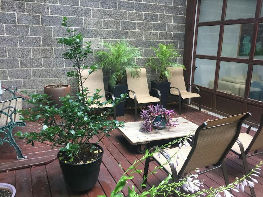 Outside: Lounge chairs flanked by miniature palm trees in private back yard!
