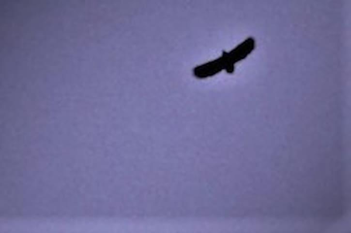 Eagles fly overhead