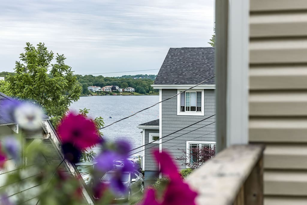 Lake Banook, the rowing club's just around that flower I swear