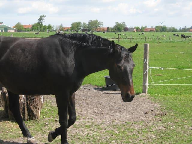 tierfreundl. App. in Ostfriesland - Großheide - Flat
