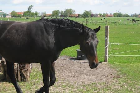 tierfreundl. App. in Ostfriesland