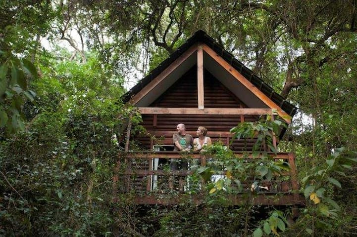 A Forest Lodge Cabin, high in an indigenous forest