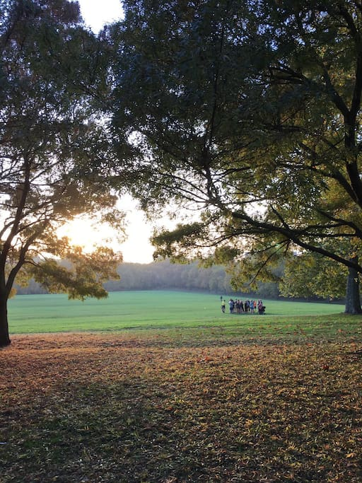 The stunning sunsets in primrose hill park