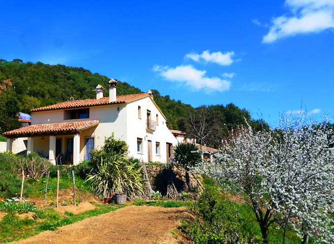 Beautiful old farmhouse with pool II  (PG-502) - Sant Mateu de Montnegre - Rumah