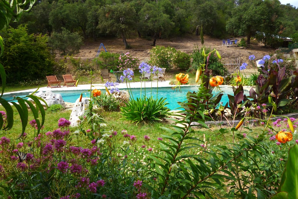 The garden around the swimming-pool is an outburst of colours in July