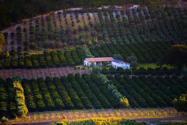 Agriturismo A Pignara - Il Limone - Locri - Dům