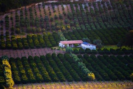 Agriturismo A Pignara - Il Limone - Locri