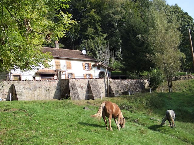 Old farm renovated in Vosges forest