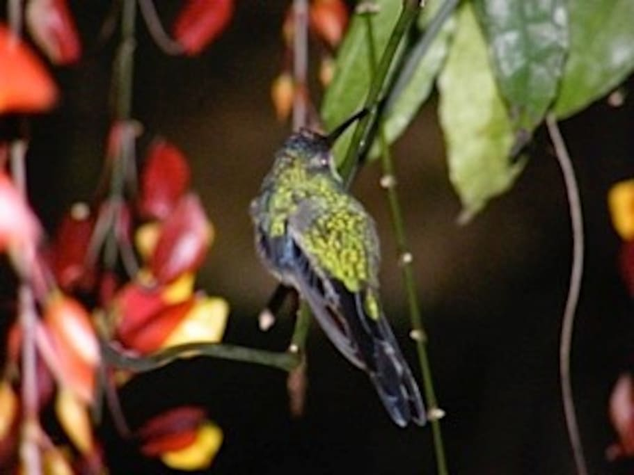 Hummingbirds are a common sight. Sometimes they even come into the house!