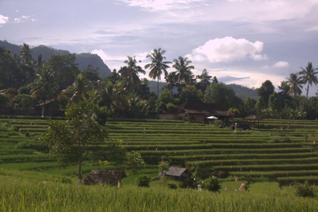 Rice terrace view from warung telaga part of astana swaha