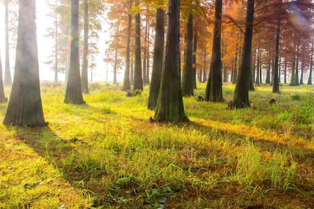 (大美天地,湖杉云庐)余姚梁弄四明湖畔水杉林最近醉美野墅。观湖赏杉、品茗农食、仰望星辰、遇见自己 - 浙江省
