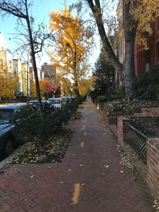 One of the prettiest streets in DC.