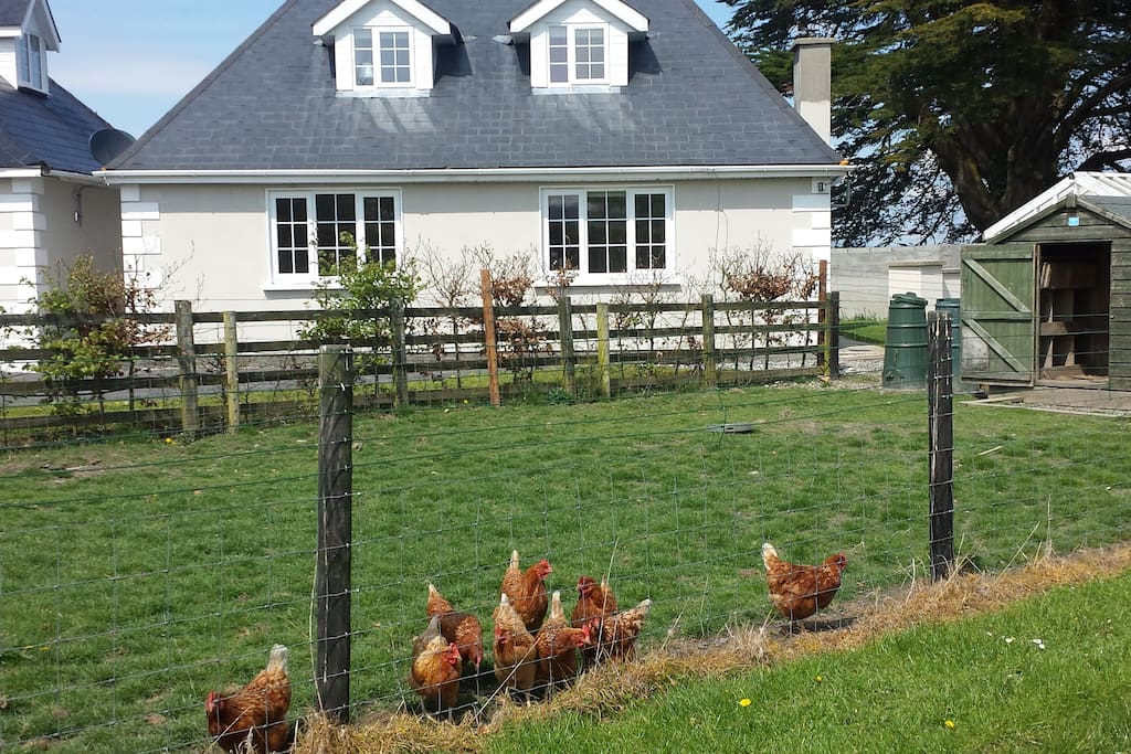 Help yourself to our free range organic eggs in the morning.