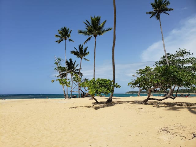 Beachfront Paradise 1 bedroom 50m from Playa Popy