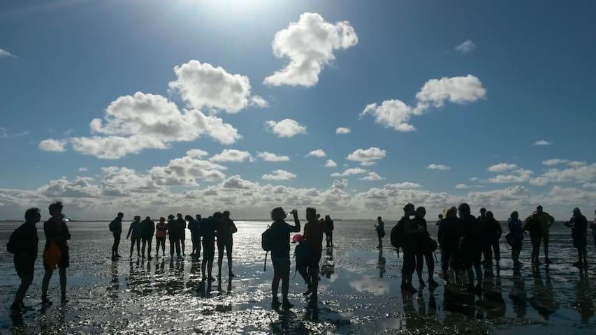 Unesco werelderfgoed de Waddenzee