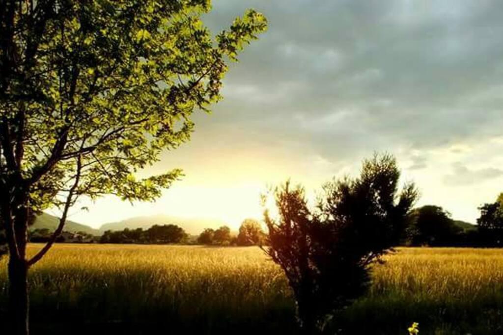 Soleil couchant dans le champ  d a   côté