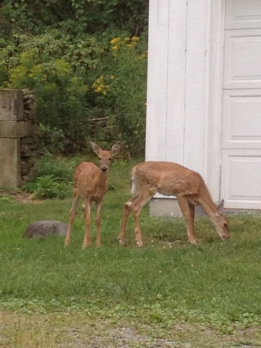 Regular visitors!  Twin deer watching us paint!