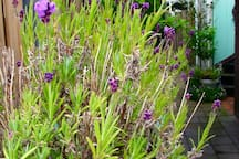 Heerlijke Waddenwoning met zonnige tuin !!