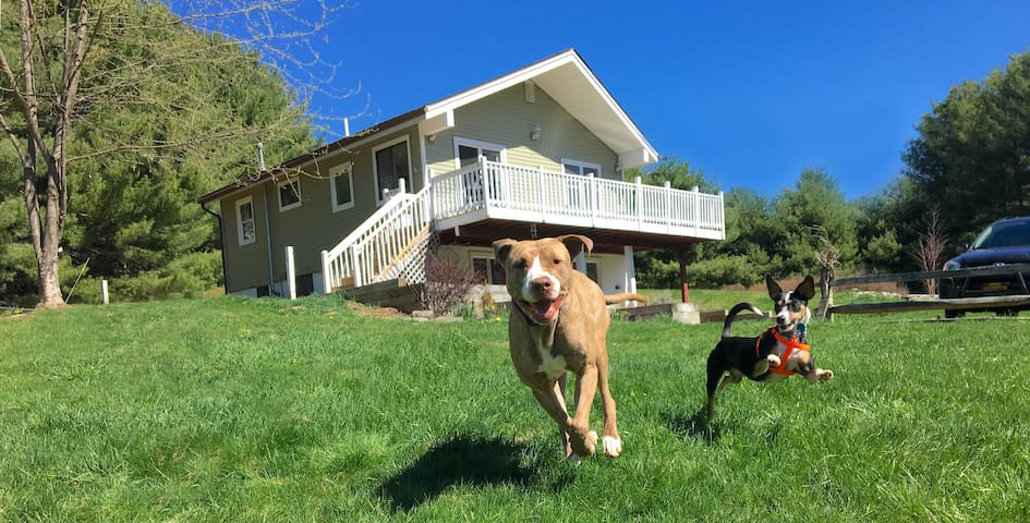 Fenced Country Escape for Dogs & Their People!