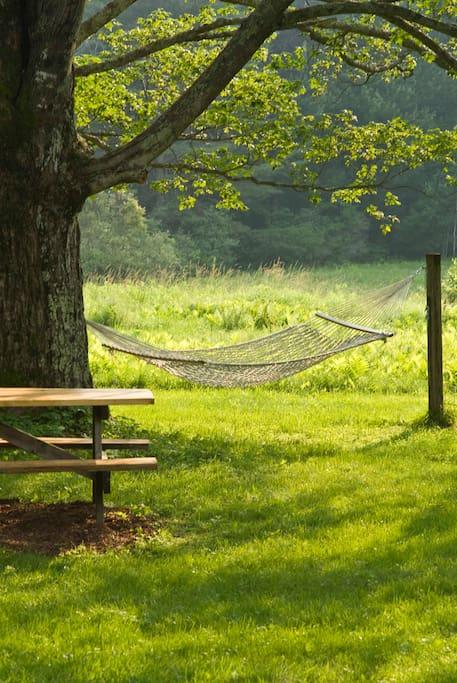 Picnic table and hammock