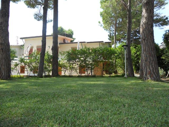 La casa e il prato tra i pini