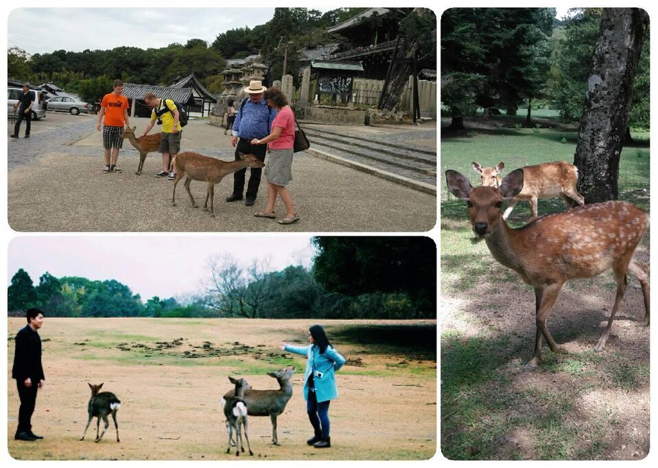 Deer Park 20min. feom Higashi-ikoma station.