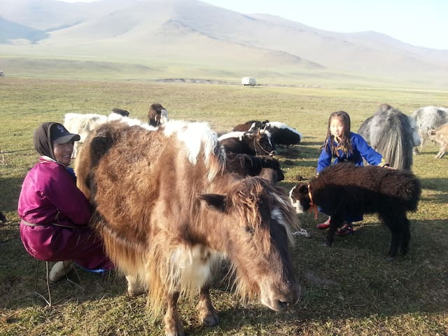 Nomadic culture experience  in the countryside