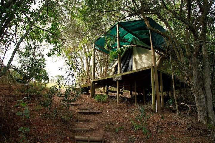 Magical Forest Tent / 2 - Knysna - Tent