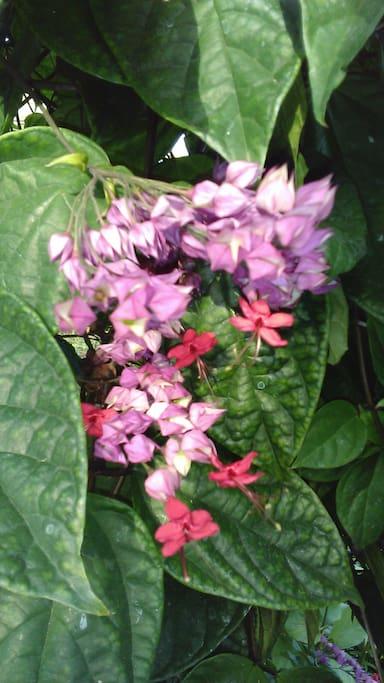 Flora silvestre de los alrededores.