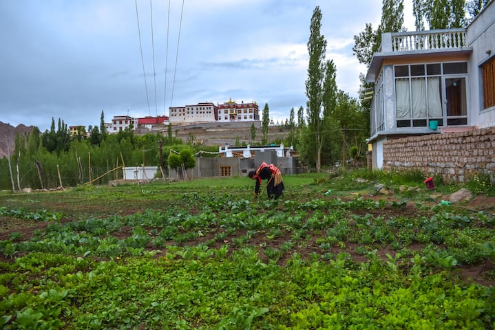 Hanugun-2 (Private Room - Himalayan Farmstays)