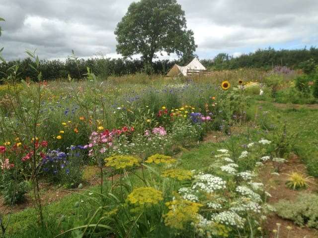 The Flower Field. An oasis of colour & fragrance.