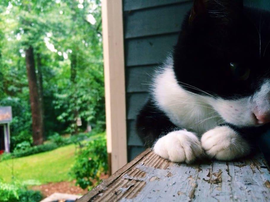 My cat (very important family member)