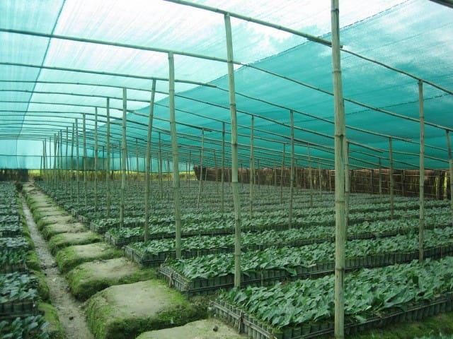 Sapoi Tea Farms :Estd 1914 (Farmhouse)