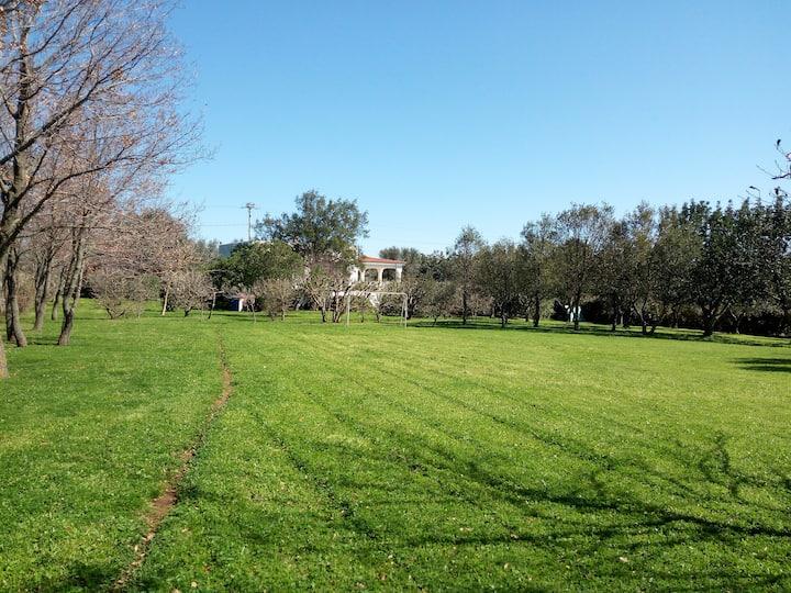 Villa Floris con giardino mediterraneo e parcoWifi