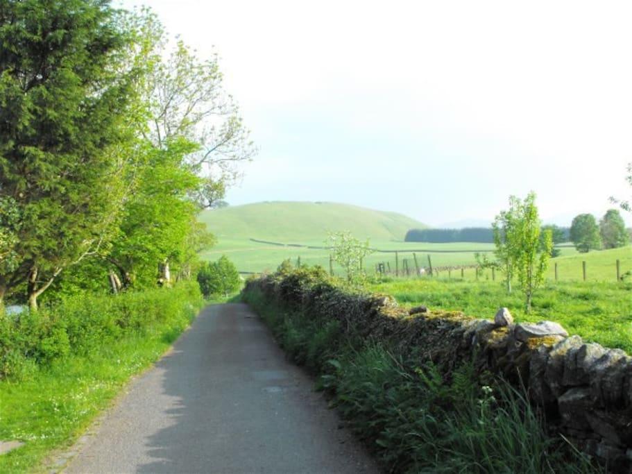 Beautiful Lane beside the Cottage