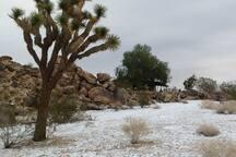 Jan 2015 snow on property