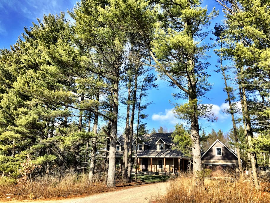 Surrounded by towering pines