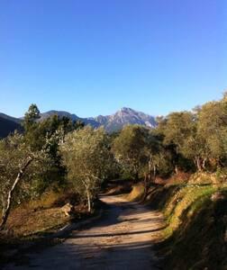 Romantisch huisje in olijfboomgaard - Apricale