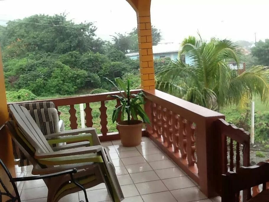 Lush natural tropical plants during our rainy season