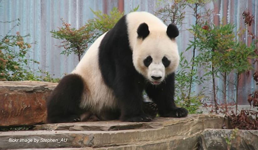 If you love animals a trip to the Zoo to see our Pandas