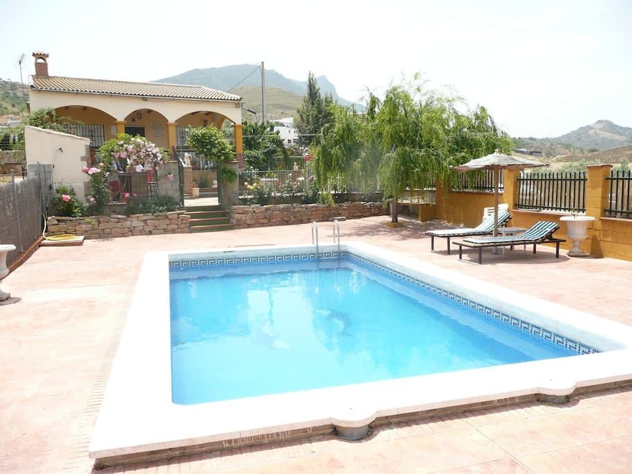 Your private swimming pool and terrace with mature flower beds