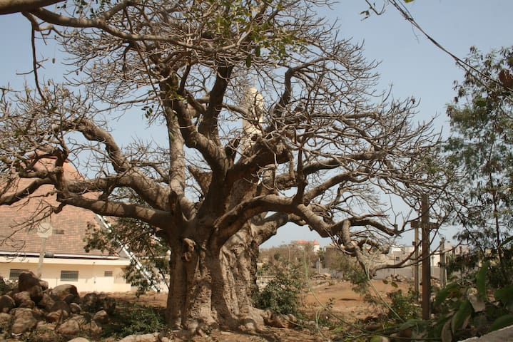 Vue sur le Baobab - Dakar - Bed & Breakfast