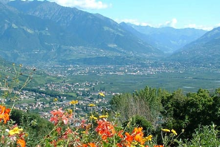 Alpenrose im Vitalhof Niederhof - Lana